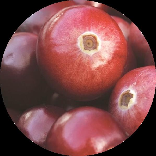 Zdjęcie owoców borówki