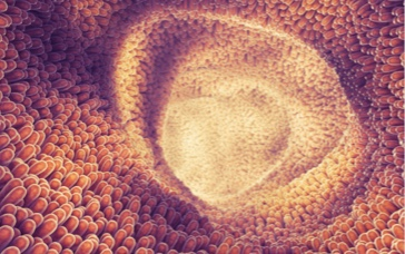 3D design inside view of our gut.